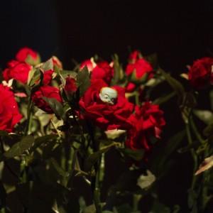 Жизнь не Розовый сад, инсталляция, 2017
